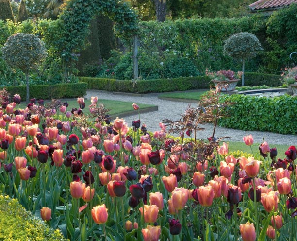 Tulip Display at East Ruston Old Vicarage gardens