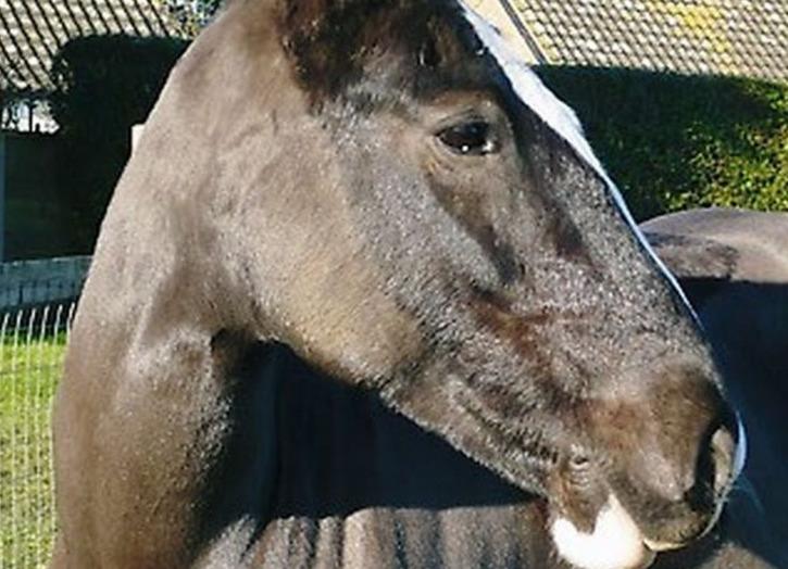 Playbarn Riding Centre horses
