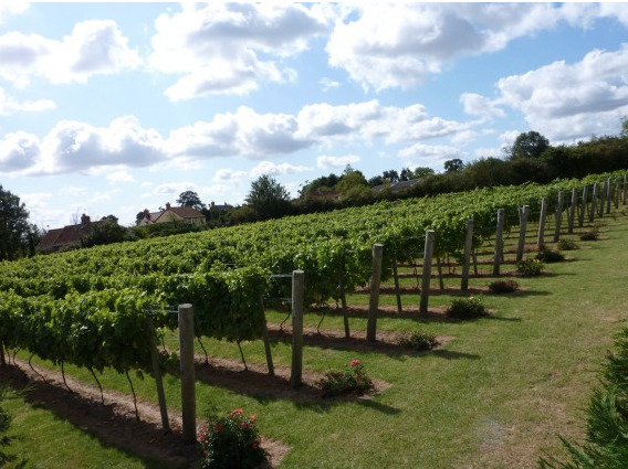 Winbirri Vineyards in Surlingham on the Southern Broads