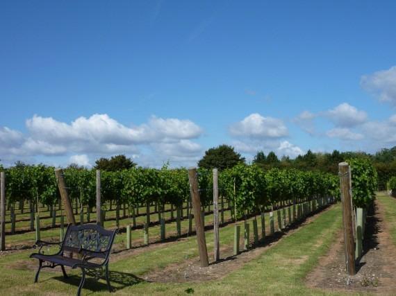 Winbirri Vineyards on the Norfolk Broads