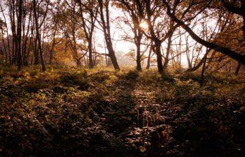 Woodland at Prince's Barn
