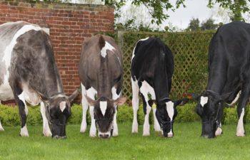 Prince's Barn Farm residents