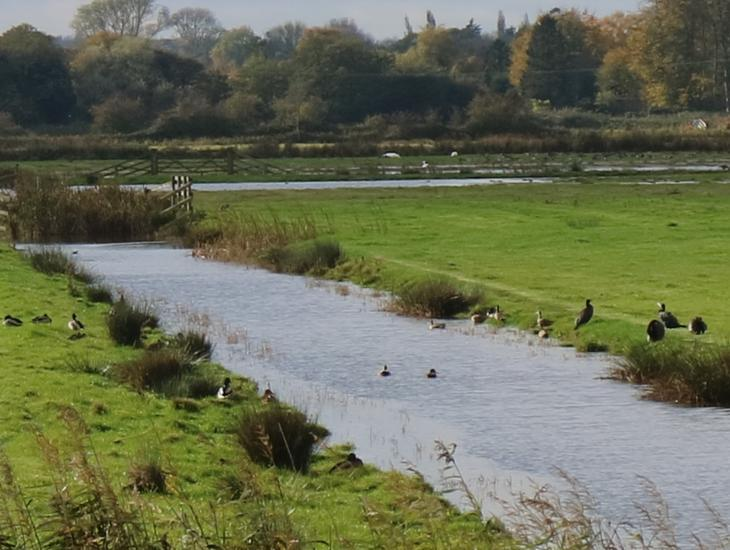 Marshland And Water Meadows At Upton