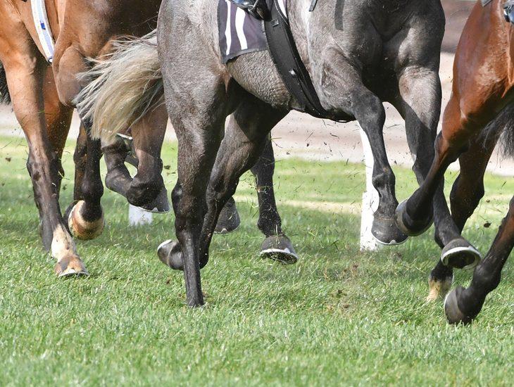 Horses Flat Racing