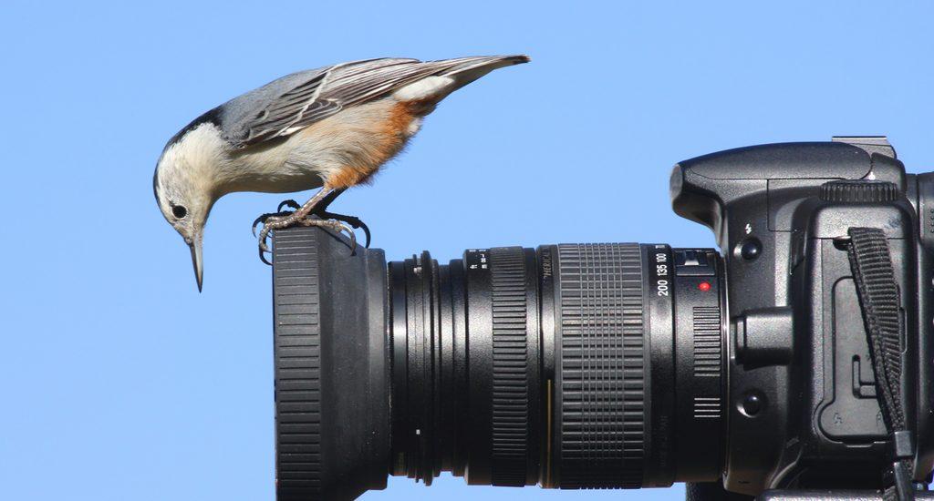 Bird Watching the Camera