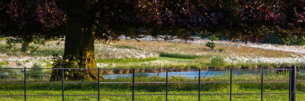Millenium Lake