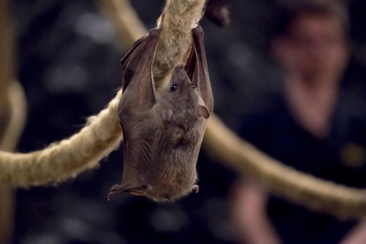 Bats In The Norfolk Broads