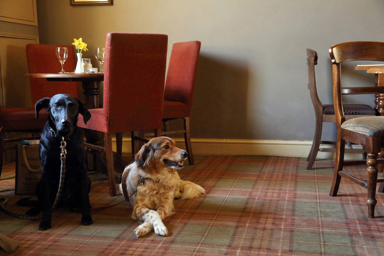 Dogs In The Bar At The Black Boys Hotel Aylsham