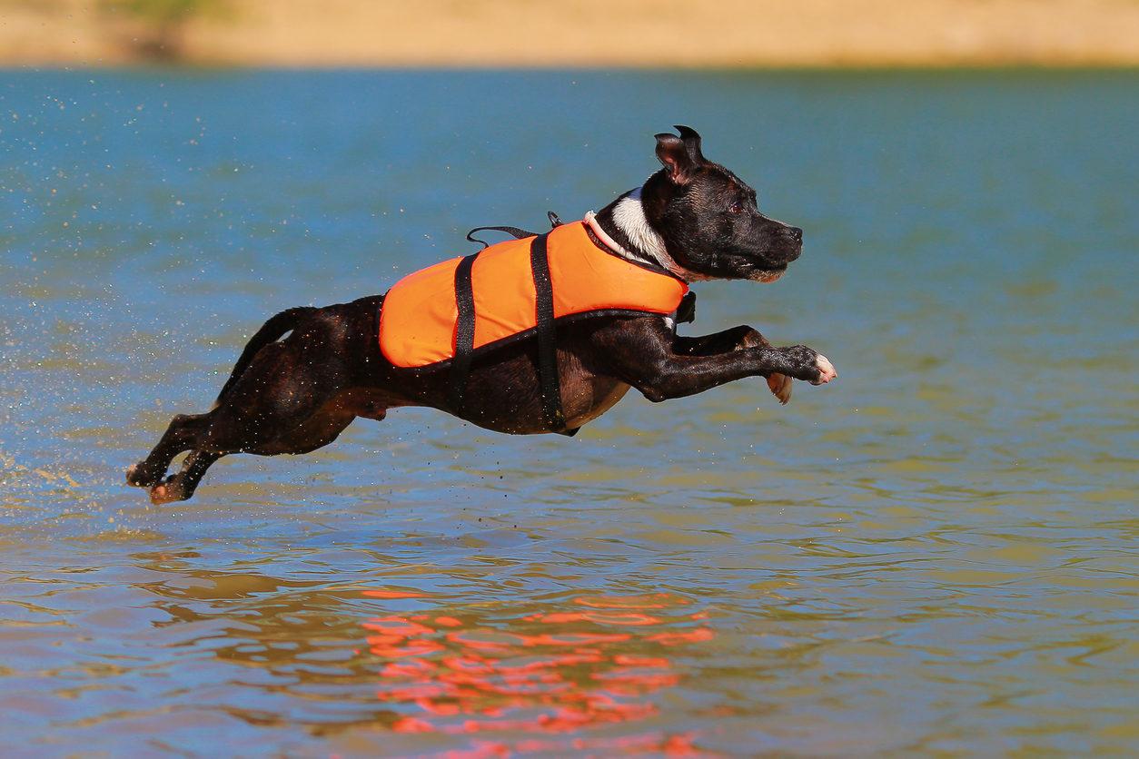 Dog Safety Jacket