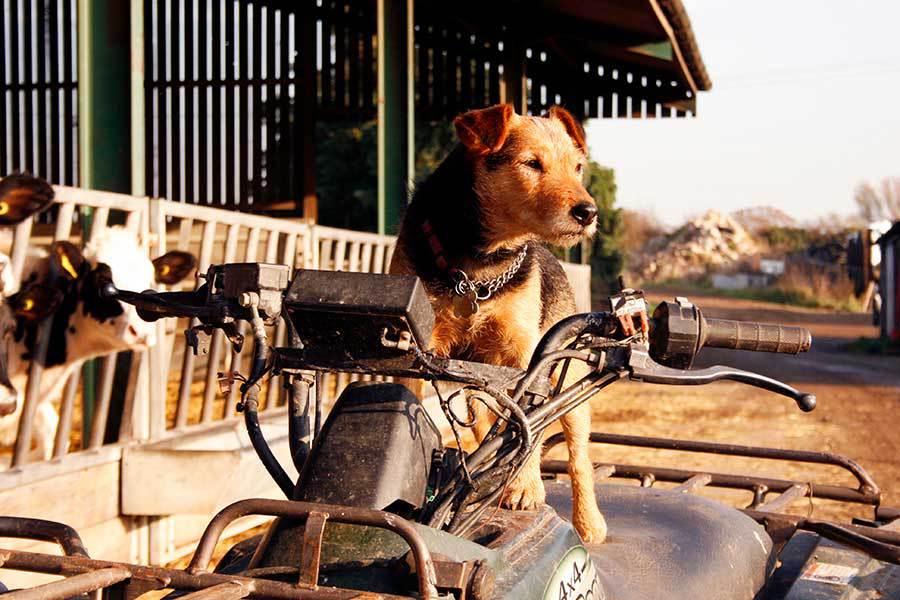 Pet Friendly Prince's Barn