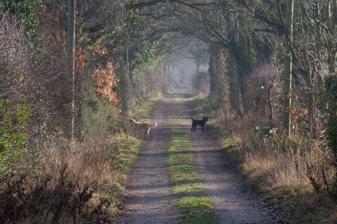 Fabulous Country Walks