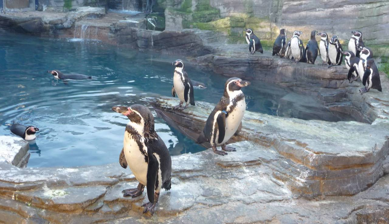 Penguins At Sea Life In Great Yarmouth Norfolk